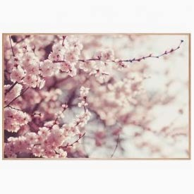 Quadro Cherry Blossoms