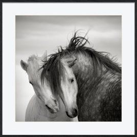 Two Stallions (Sob Encomenda)