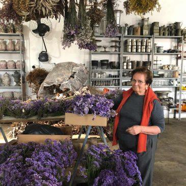 Dicas de arranjos e plantas com a florista Aparecida Helena