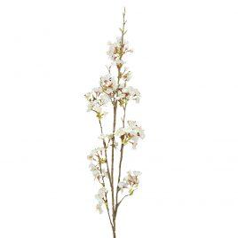 DA-34-011- Cerejeira branca