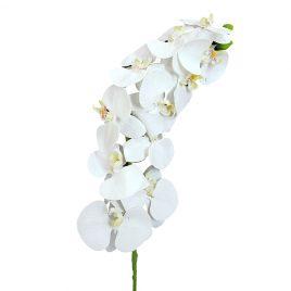 DA-35-079-Orquídea