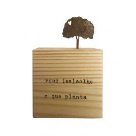 Cubo – Você (es)colhe o que você planta