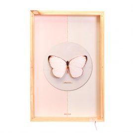 Quadro Box – Borboleta Fly