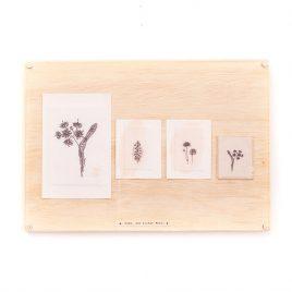 Quadro – Botânica Muda Até Brotar Flor